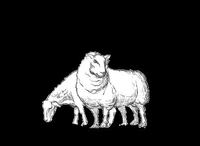 Les moutons de Cotron